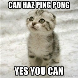 Can haz cat - can haz ping pong yes you can