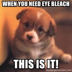 cute puppy - When you need eye bleach This is it!