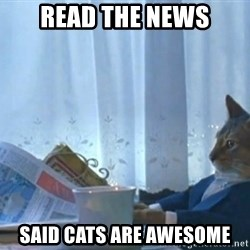 newspaper cat realization - READ THE NEWS SAID CATS ARE AWESOME