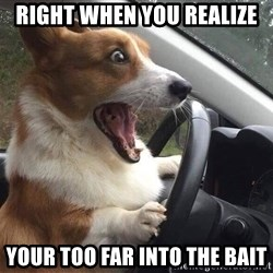 Shocked Corgi - Right when you realize your too far into the bait