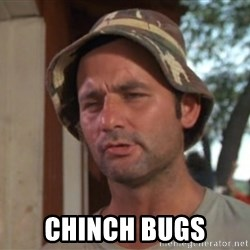 So I got that going on for me, which is nice -  chinch bugs