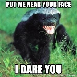 Honey Badger Actual - Put me near your face I dare you