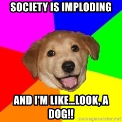 Advice Dog - Society is implodIng And I'm like...look, a dog!!