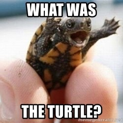 angry turtle - What was the turtle?