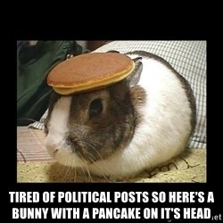Bunny with Pancake on Head -  tired of political Posts so here's a Bunny with a Pancake on it's head
