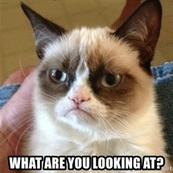 Grumpy Cat  -  what are you looking at?