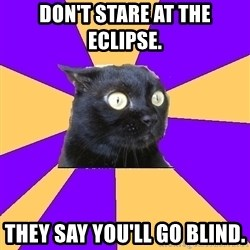 Anxiety Cat - Don't stare at the eclipse. They say you'll go blind.