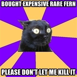 Anxiety Cat - bought expensive rare fern please don't let me kill it