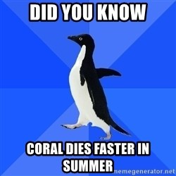 Socially Awkward Penguin - did you know coral dies faster in summer