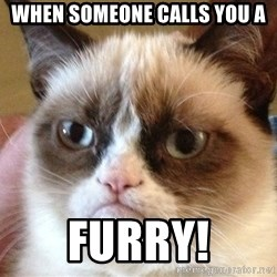 Angry Cat Meme - When someone calls you a furry!