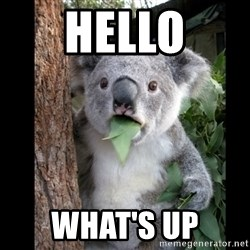 Koala can't believe it - Hello What's up