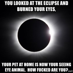 solar eclipse - You looked at the eclipse and burned your eyes, Your pet at home is now YOUR seeing eye animal.  How fucked are you?