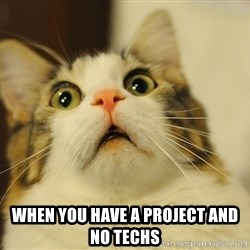 panic cat face -  when you have a project and no techs