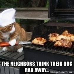 BBQ CAT -  The neighbors think their dog ran away...