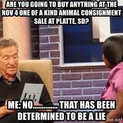 Maury Lie Detector - Are you going to buy anything at the Nov 4 One of a kind animal consignment Sale at Platte, SD? Me: NO.............. That has been determined to be a Lie