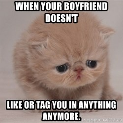Super Sad Cat - When your boyfriend doesn't  Like or tag you in anything anymore.