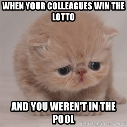 Super Sad Cat - When your colleagues win the lotto And you weren't in the pool