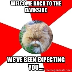 Diabetic Cat - WELCOME BACK TO THE DARKSIDE WE'VE BEEN EXPECTING YOU....