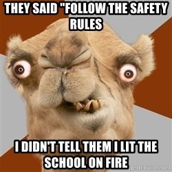 """Crazy Camel lol - they said """"follow the safety rules  i didn't tell them i lit the school on fire"""