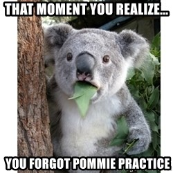 surprised koala - That moment YOu realize...  You forgot Pommie practice