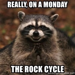 evil raccoon - really, on a Monday the Rock Cycle