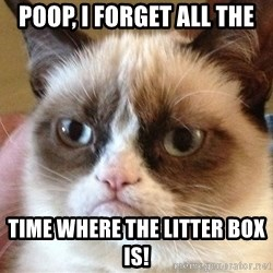 Angry Cat Meme - Poop, I forget all the Time where the litter box is!