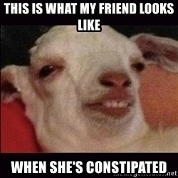 10 goat - this is what my friend looks like when she's constipated