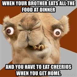 Crazy Camel lol - When yOur brother eats all the food at dinner And you have to eat chEerios when you get home.