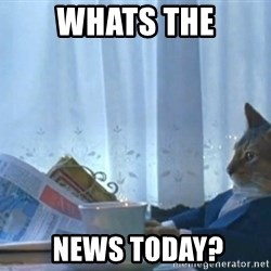 newspaper cat realization - Whats the  News today?