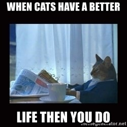 i should buy a boat cat - when cats have a better life then you do