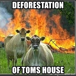 Evil Cows - deforestation of toms house
