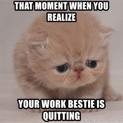 Super Sad Cat - that moment when you realize your work bestie is quitting