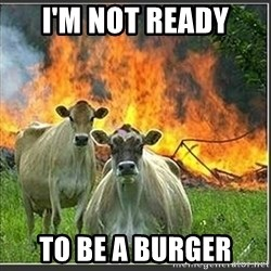 Evil Cows - I'm not ready to be a burger