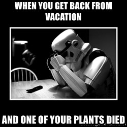 Sad Trooper - when you get back from vacation and one of your plants died