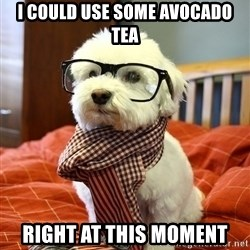 hipster dog - I could use some avocado tea right at this moment
