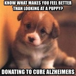 cute puppy - Know what makes you feel better than looking at a puppy? Donating to cure Alzheimers