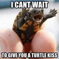 angry turtle - I cant wait To give you a turtle kiss