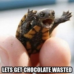 angry turtle - Lets get chocolate wasted