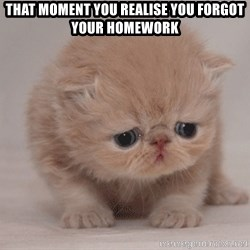 Super Sad Cat - That moment you realise you forgot your homework