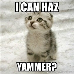 Can haz cat - i can haz yammer?