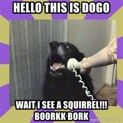 Yes, this is dog! - Hello this is dogo Wait I see a squirrel!!! BOORKK bork