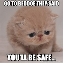 Super Sad Cat - Go to beddoe they said you'll be safe...