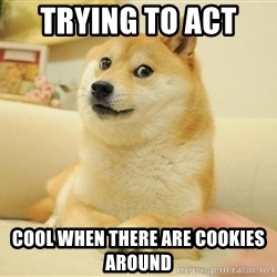 so doge - TRYing to act  cool when there are cookies around