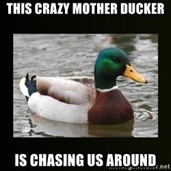 good advice duck - this crazy mother ducker Is chasing us around