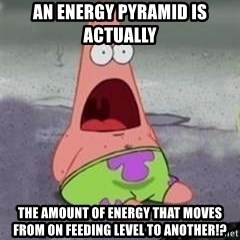 D Face Patrick - An energy pyramid is actually  the amount of energy that moves from on feeding level to another!?