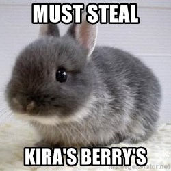 ADHD Bunny - must steal kira's berry's