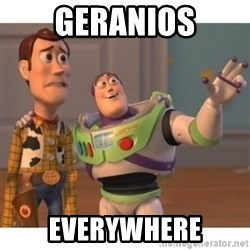 Toy story - Geranios Everywhere
