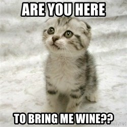 Can haz cat - Are you here To bring me wine??