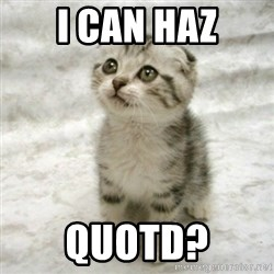 Can haz cat - i can haz quotd?