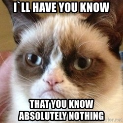 Angry Cat Meme - i`ll have you know that you know                    absolutely nothing